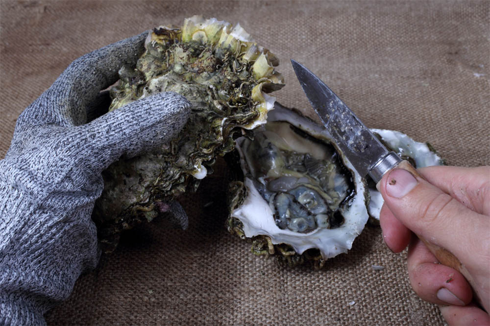 How To Prepare Oyster
