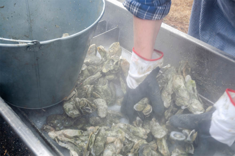 How To Steam Oyster