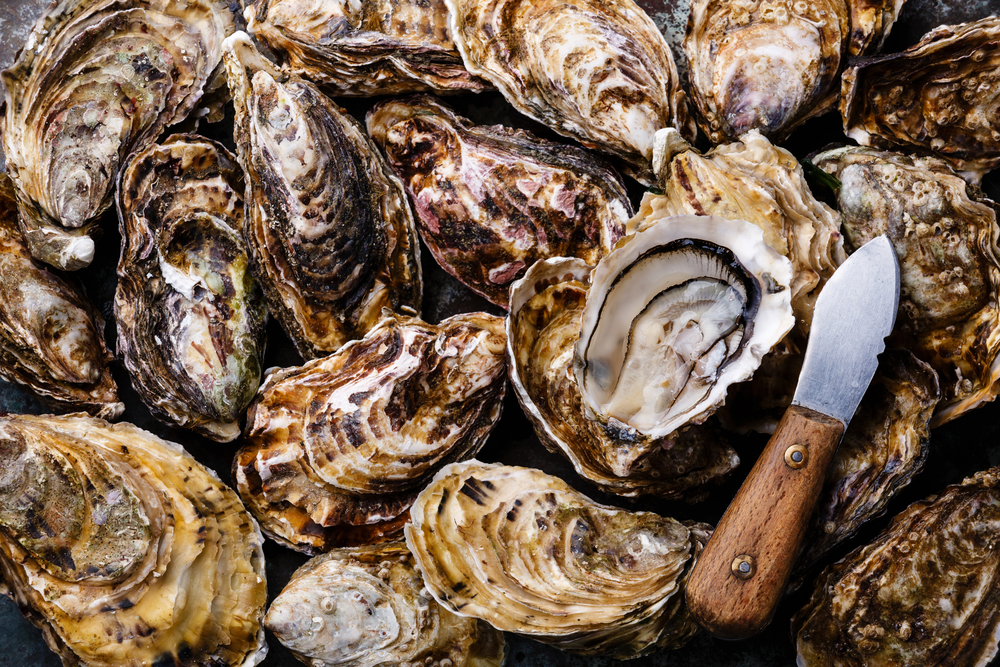 Best Oysters in San Diego