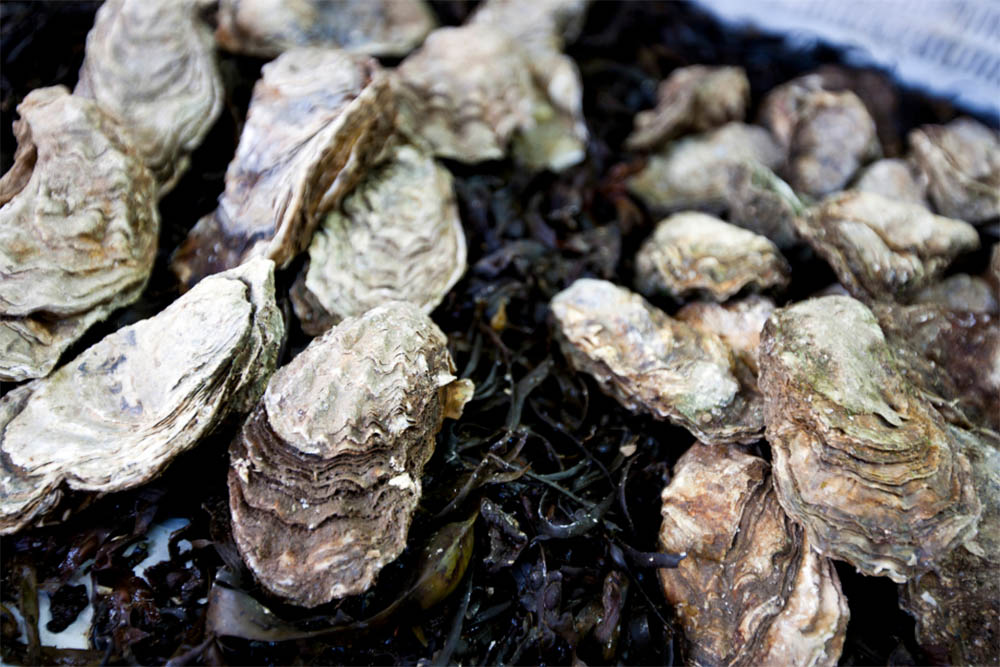best oysters in baltimore